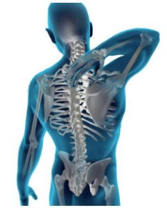 Back Pain - Spine