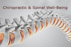 Chiropractic spine